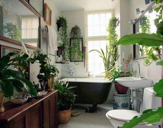 Arredo per il bagno: quali piante utilizzare